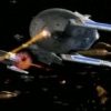 New Star Trek Series starri... - last post by djc242